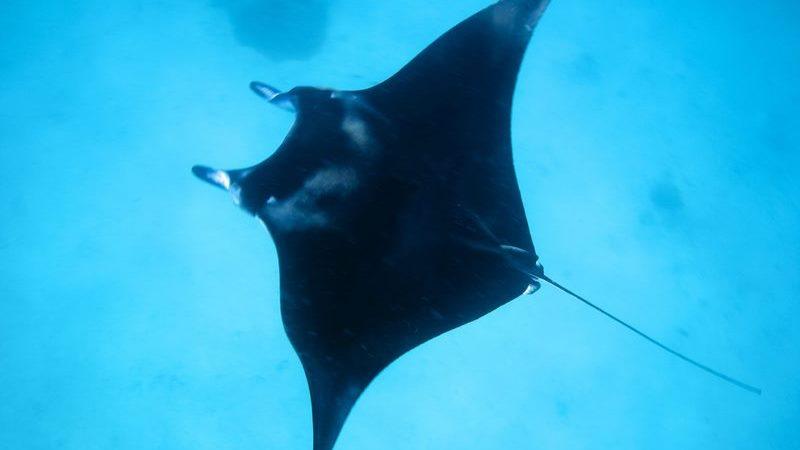 HBR_Scuba_Diving_manta-1600x1067-1