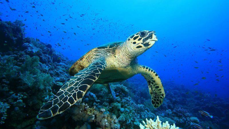 HBR_Scuba_Diving_turtle-1600x900-1